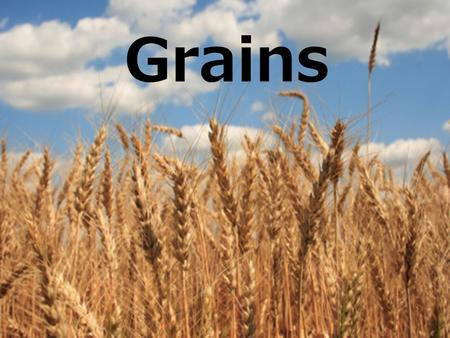 Grains. Grain Structure & Nutrients (B.E.G.) Bran The edible, outer protective layer of a seed Great source of fiber & vitamins Endosperm Holds food supply.