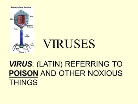 VIRUSES VIRUS: (LATIN) REFERRING TO POISON AND OTHER NOXIOUS THINGS.