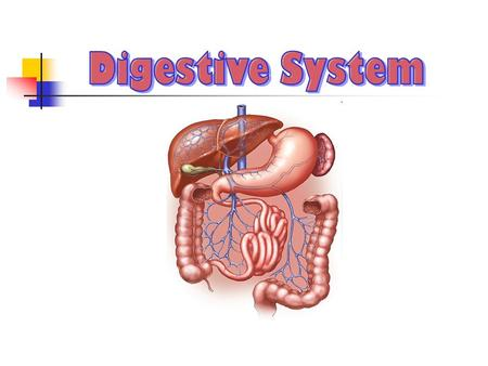 The digestive system is made of hollow organs joined in a long, twisting tube from the mouth to the anusand other organs that help the body break down.