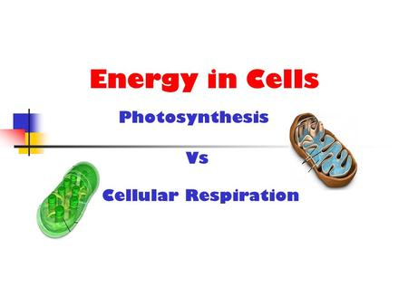 Energy in Cells Cellular Respiration Photosynthesis Vs.