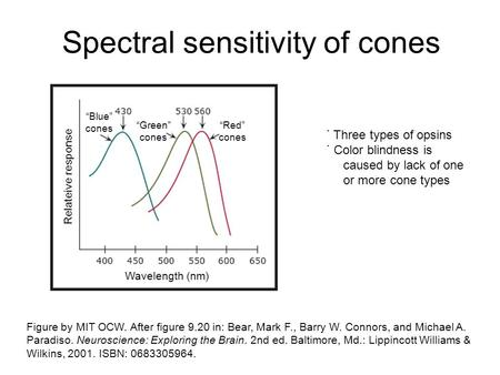 Spectral sensitivity of cones