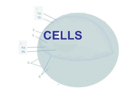 CELLS. Cells basic structural & functional units of all living organisms.