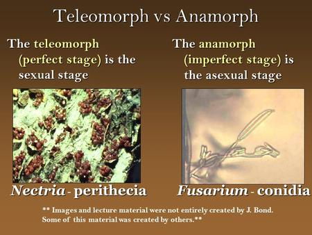 Teleomorph vs Anamorph The teleomorph (perfect stage) is the sexual stage The anamorph (imperfect stage) is the asexual stage Nectriaperithecia Nectria.