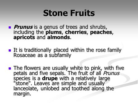 Stone Fruits Prunus is a genus of trees and shrubs, including the plums, cherries, peaches, apricots and almonds. Prunus is a genus of trees and shrubs,