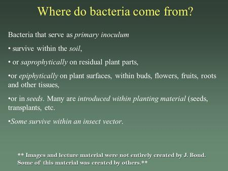 Where do bacteria come from? Bacteria that serve as primary inoculum survive within the soil, or saprophytically on residual plant parts, or epiphytically.