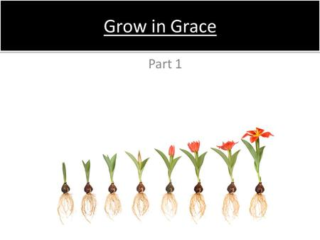 Grow in Grace Part 1. The Christian life begins with a birth –R–Receiving Christ we are born again – Jn 1:12-13 –N–Nicodemus & the new birth – Jn 3:1-13.
