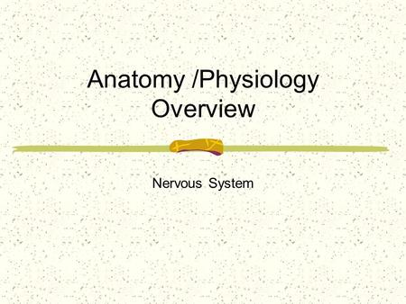 Anatomy /Physiology Overview Nervous System. The human nervous system is highly complex. It is divided into the central nervous system, consisting of.