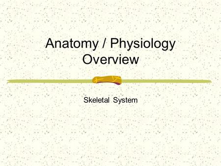 Anatomy / Physiology Overview Skeletal System. Defined as the framework of bones, cartilage, ligaments and other connective tissues in the human body.