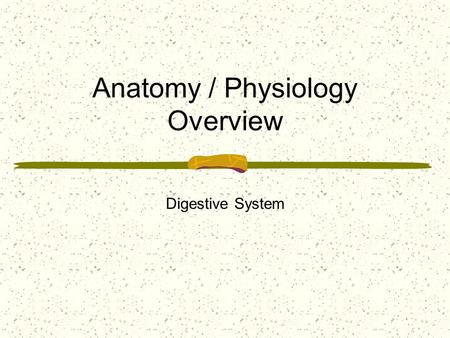 Anatomy / Physiology Overview Digestive System. Digestion of liquid and solid food, from the time it is taken into the mouth until essential compounds.
