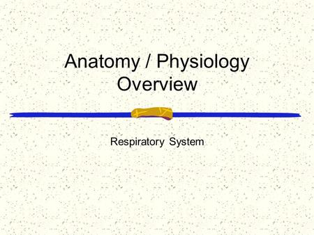 Anatomy / Physiology Overview Respiratory System.