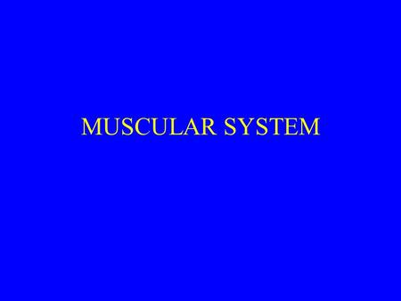 MUSCULAR SYSTEM. INTRODUCTION OVER 600 MUSCLES MAKE UP THE MUSCULAR SYSTEM MUSCLES ARE MADE OF BUNDLES OF MUSCLE FIBERS THAT ARE HELD TOGETHER BY CONNECTIVE.