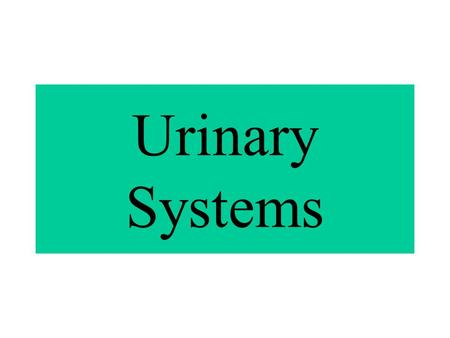 Urinary Systems Also known as Excretory System Removes certain wastes and excess water from body Maintains acid-base balance.