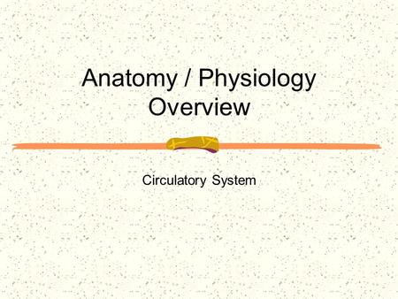 Anatomy / Physiology Overview Circulatory System.
