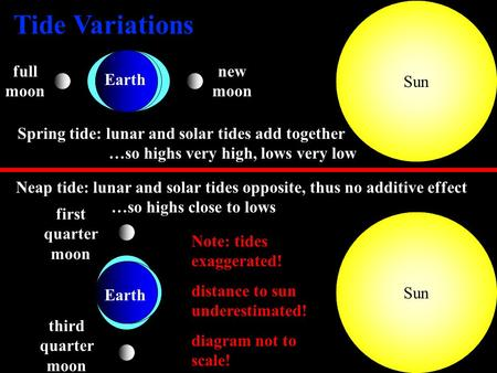 1 Sun new moon full moon Spring tide: lunar and solar tides add together …so highs very high, lows very low Neap tide: lunar and solar tides opposite,