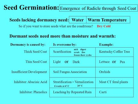 Seed Germination: Emergence of Radicle through Seed Coat