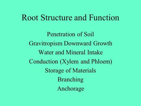 Root Structure and Function Penetration of Soil Gravitropism Downward Growth Water and Mineral Intake Conduction (Xylem and Phloem) Storage of Materials.