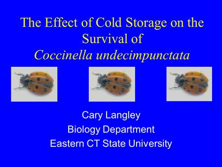 The Effect of Cold Storage on the Survival of Coccinella undecimpunctata Cary Langley Biology Department Eastern CT State University.