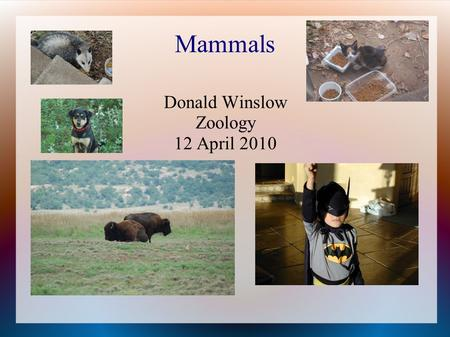 Mammals Donald Winslow Zoology 12 April 2010. Characteristics of mammals Synapsid skull, hair, keratin, follicles Glands: sweat, scent, sebaceous, and.