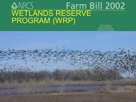 Slide 1 WETLANDS RESERVE PROGRAM (WRP). Slide 2 WRP Key Points Restore and protect functions/values of wetlands in ag landscape Optimize wildlife habitat.