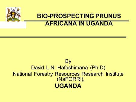 BIO-PROSPECTING PRUNUS AFRICANA IN UGANDA By David L.N. Hafashimana (Ph.D) National Forestry Resources Research Institute (NaFORRI), UGANDA.