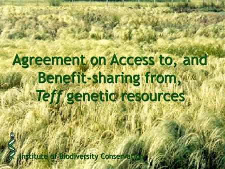 Agreement on Access to, and Benefit-sharing from, Teff genetic resources Institute of Biodiversity Conservation.