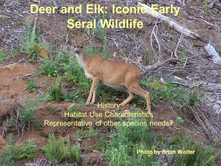 Deer and Elk: Iconic Early Seral Wildlife History Habitat Use Characteristics Representative of other species needs? Photo by Brian Wolfer.
