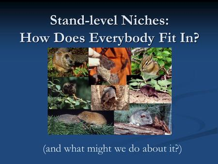 (and what might we do about it?) Stand-level Niches: How Does Everybody Fit In?