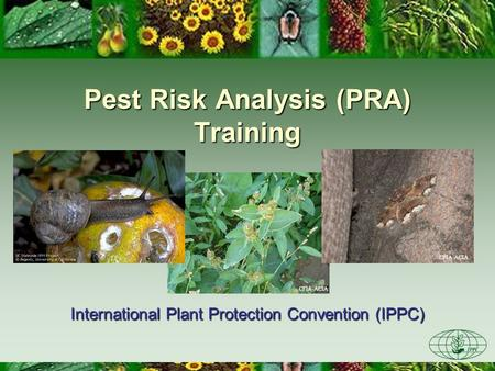 CFIA-ACIA Pest Risk Analysis (PRA) Training International Plant Protection Convention (IPPC) CFIA-ACIA.