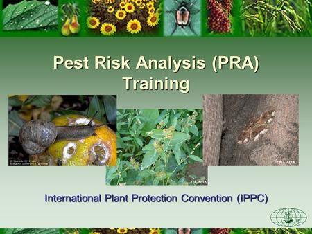 1 CFIA-ACIA Pest Risk Analysis (PRA) Training International Plant Protection Convention (IPPC) CFIA-ACIA.