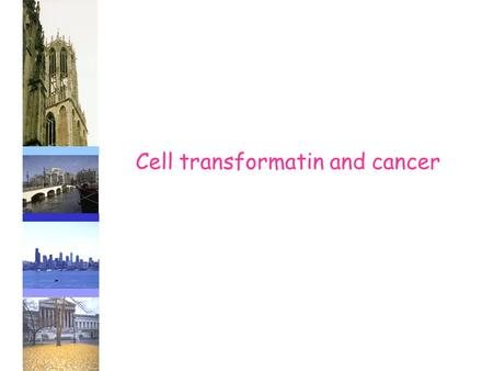 Cell transformatin and cancer. I Subjects treated in this lecture - definition of cancer - transformation of the cell; from benign to malign - mutations.