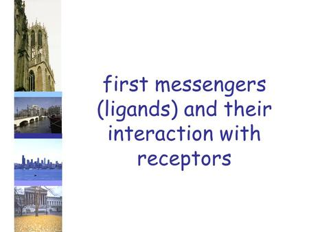 First messengers (ligands) and their interaction with receptors.