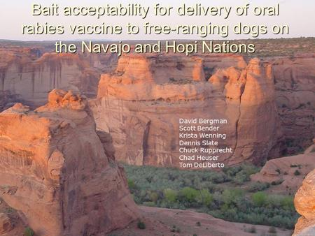 Bait acceptability for delivery of oral rabies vaccine to free-ranging dogs on the Navajo and Hopi Nations David Bergman Scott Bender Krista Wenning Dennis.
