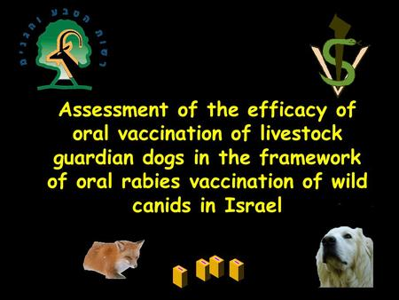 Assessment of the efficacy of oral vaccination of livestock guardian dogs in the framework of oral rabies vaccination of wild canids in Israel.