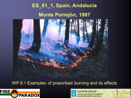 ES_61_1, Spain, Andalucía Monte Porrejón, 1987 WP 9.1 Examples of prescribed burning and its effects.
