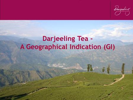 Darjeeling Tea - A Geographical Indication (GI). WORLD TEA SCENARIO - 2010.