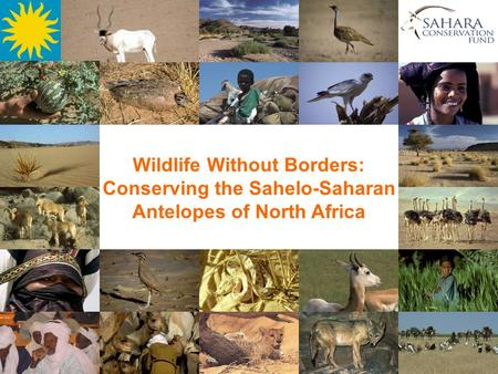 Wildlife Without Borders: Conserving the Sahelo-Saharan Antelopes of North Africa.