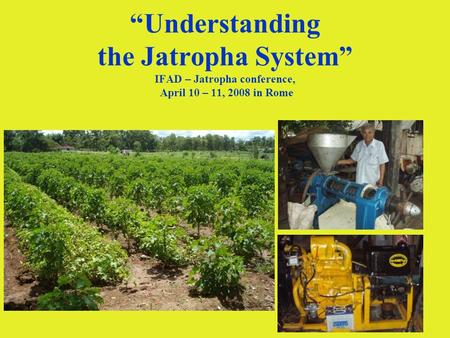 1 Understanding the Jatropha System IFAD – Jatropha conference, April 10 – 11, 2008 in Rome.