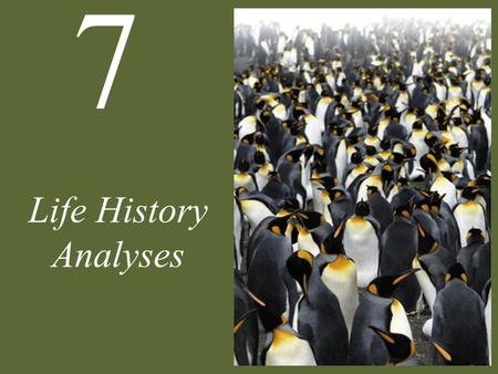 7 Life History Analyses. 7 Life History Analyses Case Study: Nemo Grows Up Life History Diversity Life History Continua Trade-Offs Life Cycle Evolution.