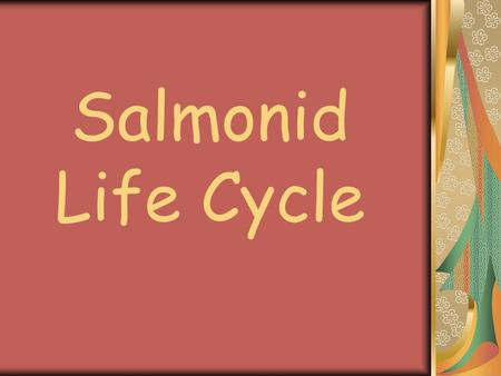 Salmonid Life Cycle. Eggs Alevin Fry Smolt Adult Spawner Freshwater Estuary Ocean.