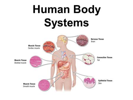 human physiology from cells to systems pdf download