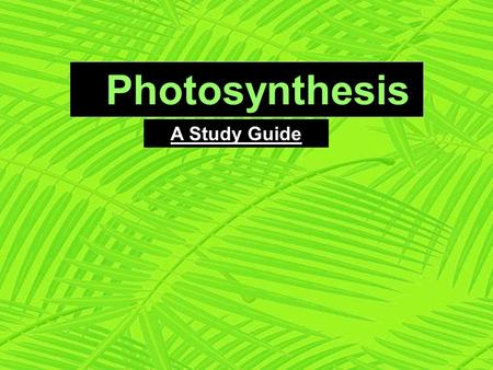 Photosynthesis A Study Guide. O 2 and glucose CO 2 H2OH2O Plants can make its own food [glucose] by using light from the Sun. A by-product of this process.