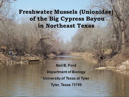 Neil B. Ford Department of Biology University of Texas at Tyler Tyler, Texas 75799 Freshwater Mussels (Unionidae) of the Big Cypress Bayou in Northeast.