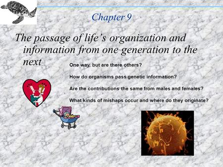 Chapter 9 The passage of lifes organization and information from one generation to the next One way, but are there others? How do organisms pass genetic.