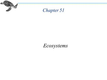 Chapter 51 Ecosystems. n Population: all the individuals of a certain species that live in a particular area n Community: all the different species that.