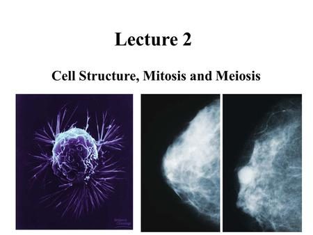 Lecture 2 Cell Structure, Mitosis and Meiosis. Study Questions - Lecture 2 1)Describe the major components of a typical animal cell and their function(s).