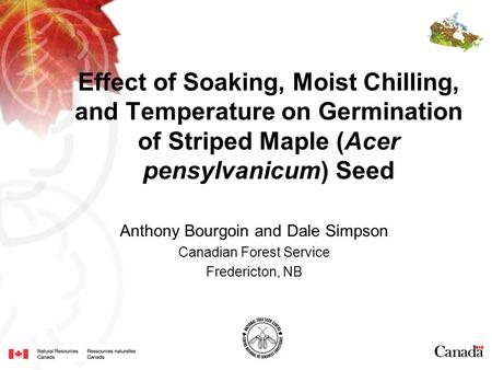 Effect of Soaking, Moist Chilling, and Temperature on Germination of Striped Maple (Acer pensylvanicum) Seed Anthony Bourgoin and Dale Simpson Canadian.