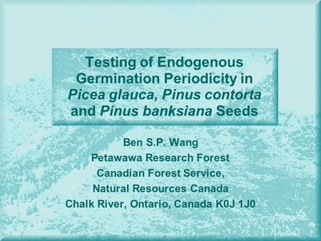 Testing of Endogenous Germination Periodicity in Picea glauca, Pinus contorta and Pinus banksiana Seeds Ben S.P. Wang Petawawa Research Forest Canadian.