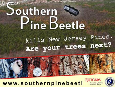Www.southernpinebeetl e.nj.gov. Active for decades in Southeastern U.S. Reported insect problem in New Jersey in 2001 Confirmed by NJFS & USFS (Dendroctonus.