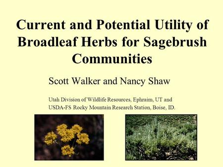 Current and Potential Utility of Broadleaf Herbs for Sagebrush Communities Scott Walker and Nancy Shaw Utah Division of Wildlife Resources, Ephraim, UT.