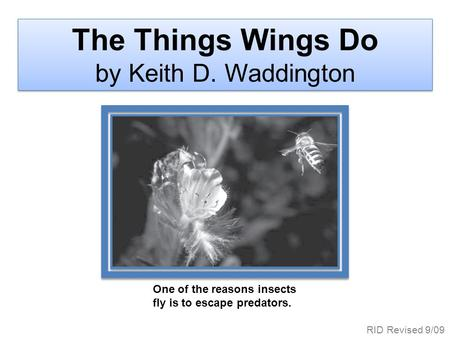 One of the reasons insects fly is to escape predators. The Things Wings Do by Keith D. Waddington RID Revised 9/09.